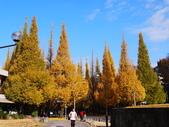 2013東京生日之旅DAY3 外苑→明治神宮→代官山→自由之丘:P1170426.JPG