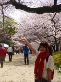 2013春賞櫻8日行***DAY3 醍醐寺→金閣寺→平野神社:1541713067.jpg