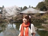 2013春賞櫻8日行***DAY3 醍醐寺→金閣寺→平野神社:1541713102.jpg