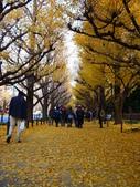 2013東京生日之旅DAY3 外苑→明治神宮→代官山→自由之丘:P1170363.JPG