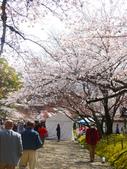 2013春賞櫻8日行***DAY3 醍醐寺→金閣寺→平野神社:1541713068.jpg
