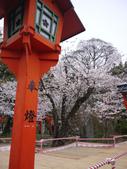 2013春賞櫻8日行***DAY3 醍醐寺→金閣寺→平野神社:1541713166.jpg