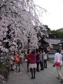 2013春賞櫻8日行***DAY3 醍醐寺→金閣寺→平野神社:1541713167.jpg