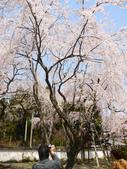 2013春賞櫻8日行***DAY3 醍醐寺→金閣寺→平野神社:1541713070.jpg