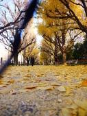 2013東京生日之旅DAY3 外苑→明治神宮→代官山→自由之丘:P1170378.JPG