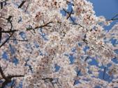 2013春賞櫻8日行***DAY3 醍醐寺→金閣寺→平野神社:1541713072.jpg