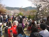 2013春賞櫻8日行***DAY3 醍醐寺→金閣寺→平野神社:1541713106.jpg