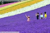 2014夏‧北海道家族之旅DAY2富良野→富田農場:10352387_828893353788878_6575137318461330843_n.jpg