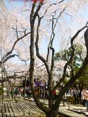 2013春賞櫻8日行***DAY3 醍醐寺→金閣寺→平野神社:1541713073.jpg