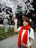 2013春賞櫻8日行***DAY3 醍醐寺→金閣寺→平野神社:1541713171.jpg