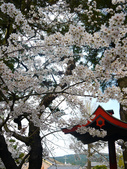 **春賞櫻8日行***Day5 奈良→春日大社→新藥師寺→東大寺→冰室神社:1621372282.jpg