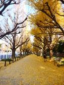 2013東京生日之旅DAY3 外苑→明治神宮→代官山→自由之丘:P1170379.JPG