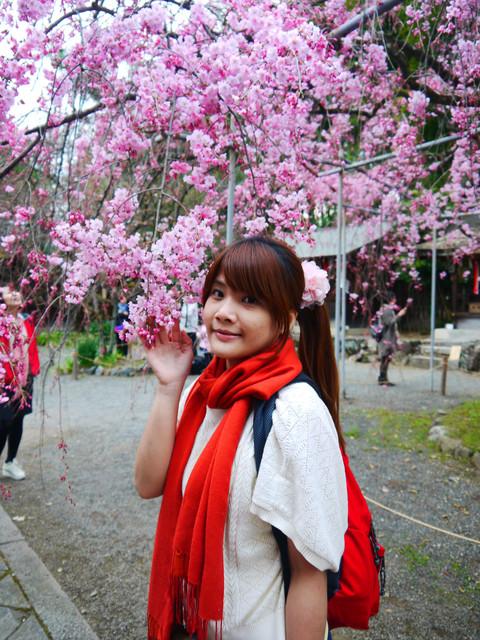 2013春賞櫻8日行***DAY3 醍醐寺→金閣寺→平野神社:1541713172.jpg