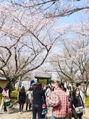 2013春賞櫻8日行***DAY3 醍醐寺→金閣寺→平野神社:1541713139.jpg