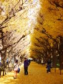 2013東京生日之旅DAY3 外苑→明治神宮→代官山→自由之丘:P1170421.JPG