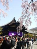 2013春賞櫻8日行***DAY3 醍醐寺→金閣寺→平野神社:1541713077.jpg