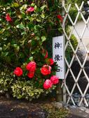 **春賞櫻8日行***Day5 奈良→春日大社→新藥師寺→東大寺→冰室神社:1621372189.jpg