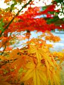 2013日本東北紅葉鐵腿行Day7鳴子峽→平泉中尊寺、毛越寺:P1160036.jpg