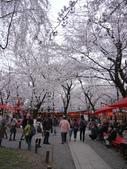 2013春賞櫻8日行***DAY3 醍醐寺→金閣寺→平野神社:1541713179.jpg