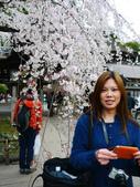 2013春賞櫻8日行***DAY3 醍醐寺→金閣寺→平野神社:1541713175.jpg