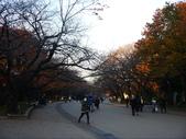 2013.12月東京生日之旅DAY1:P1160812.JPG