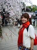 2013春賞櫻8日行***DAY3 醍醐寺→金閣寺→平野神社:1541713176.jpg