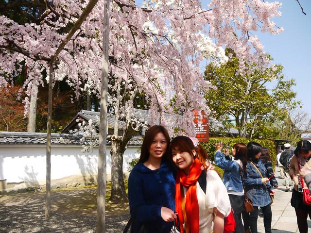2013春賞櫻8日行***DAY3 醍醐寺→金閣寺→平野神社:1541713081.jpg