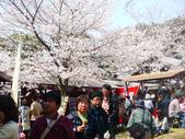 2013春賞櫻8日行***DAY3 醍醐寺→金閣寺→平野神社:1541713113.jpg