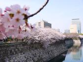 **春賞櫻8日行***Day8 大阪城→台灣:1230550024.jpg