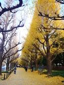 2013東京生日之旅DAY3 外苑→明治神宮→代官山→自由之丘:P1170371.JPG
