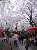 2013春賞櫻8日行***DAY3 醍醐寺→金閣寺→平野神社:1541713177.jpg