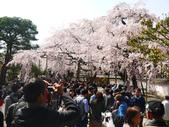 2013春賞櫻8日行***DAY3 醍醐寺→金閣寺→平野神社:1541713082.jpg