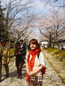 2013春賞櫻8日行***DAY3 醍醐寺→金閣寺→平野神社:1541713114.jpg