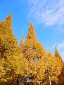 2013東京生日之旅DAY3 外苑→明治神宮→代官山→自由之丘:P1170432.JPG