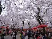2013春賞櫻8日行***DAY3 醍醐寺→金閣寺→平野神社:1541713178.jpg