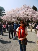 2013春賞櫻8日行***DAY3 醍醐寺→金閣寺→平野神社:1541713083.jpg