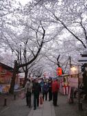 2013春賞櫻8日行***DAY3 醍醐寺→金閣寺→平野神社:1541713180.jpg