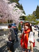 2013春賞櫻8日行***DAY3 醍醐寺→金閣寺→平野神社:1541713085.jpg