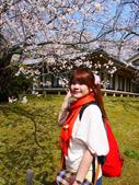 2013春賞櫻8日行***DAY3 醍醐寺→金閣寺→平野神社:1541713119.jpg