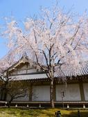 2013春賞櫻8日行***DAY3 醍醐寺→金閣寺→平野神社:1541713121.jpg