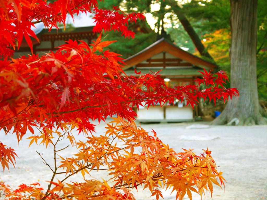 2013日本東北紅葉鐵腿行Day7鳴子峽→平泉中尊寺、毛越寺:P1160042.jpg