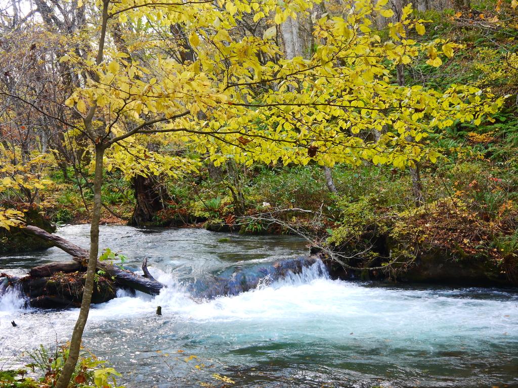 2013日本東北紅葉鐵腿行Day2 奧入瀨溪→十和田湖:P1120956.JPG