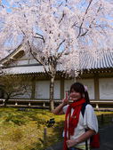 2013春賞櫻8日行***DAY3 醍醐寺→金閣寺→平野神社:1541713122.jpg