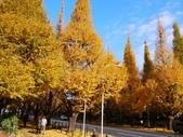 2013東京生日之旅DAY3 外苑→明治神宮→代官山→自由之丘:P1170431.JPG