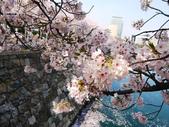**春賞櫻8日行***Day8 大阪城→台灣:1230550032.jpg