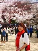 2013春賞櫻8日行***DAY3 醍醐寺→金閣寺→平野神社:1541713089.jpg