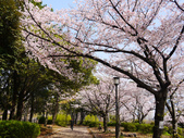 **春賞櫻8日行***Day8 大阪城→台灣:1230549998.jpg