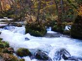 2013日本東北紅葉鐵腿行Day2 奧入瀨溪→十和田湖:P1120791.JPG