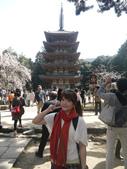2013春賞櫻8日行***DAY3 醍醐寺→金閣寺→平野神社:1541713090.jpg