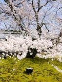 2013春賞櫻8日行***DAY3 醍醐寺→金閣寺→平野神社:1541713124.jpg